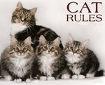 Cat Rules! - Everyday is Caturday -