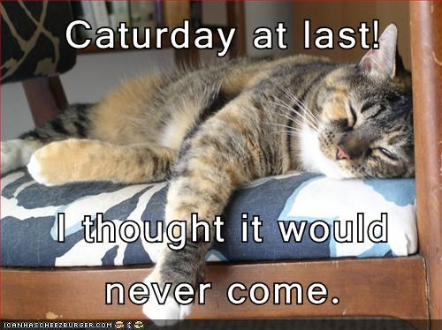 Image result for caturday heroes images