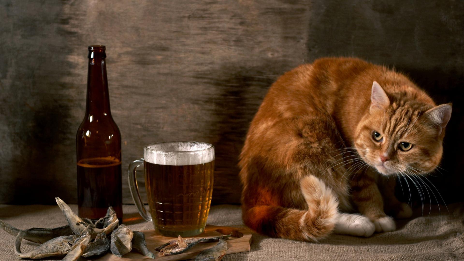 Cat-And-Beer-Funny-Animal-Wallpaper-HD-free-for-desktop.jpg